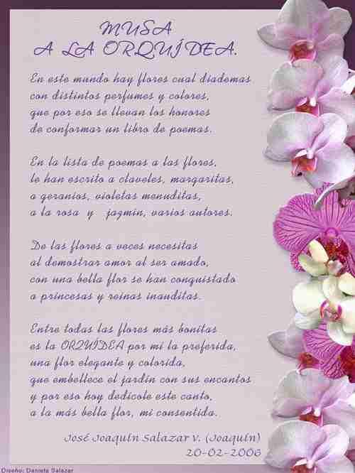 Orquidea Fundación Cheguaco